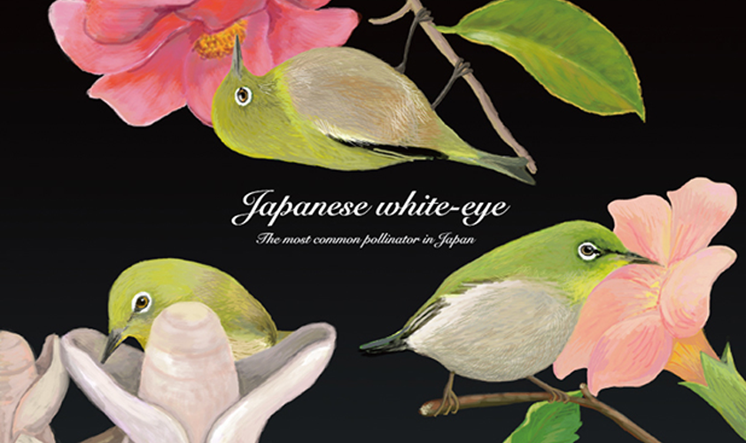Japanese White Eye (Photoshop, 2013)